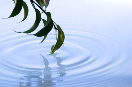 retreat - leaf in pool of water